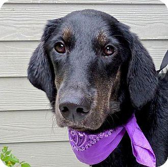 Setter (Unknown Type) Mix Dog for adoption in Baton Rouge, Louisiana - Jenny