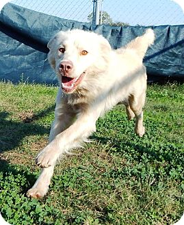 Border Collie Mix Dog for adoption in Terrell, Texas - Sam