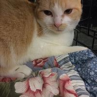Adopt A Pet :: Lady & Becky - Clay, NY