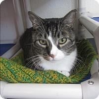 Adopt A Pet :: Caesar - Ridgway, CO