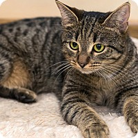 Adopt A Pet :: Emerald - Louisville, KY