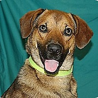 Adopt A Pet :: Scout (Westhampton) - New York, NY