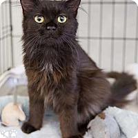 Adopt A Pet :: Jerri - Merrifield, VA