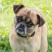 Adopt A Pet :: Bella Breeze - Alpharetta, GA