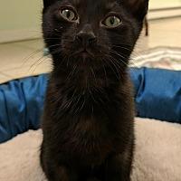 Adopt A Pet :: Leon - Austintown, OH