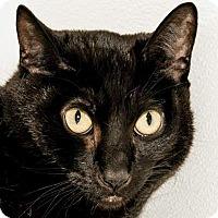 Adopt A Pet :: Columbus - Prescott, AZ