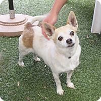 Adopt A Pet :: Matcha - Oakland, CA