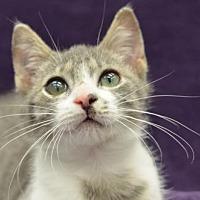 Adopt A Pet :: Risky171141 - Atlanta, GA