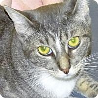 Adopt A Pet :: Whitney - Mt. Vernon, NY
