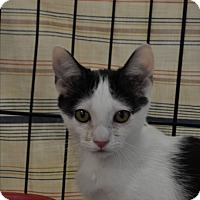 Adopt A Pet :: Mickey - La Canada Flintridge, CA