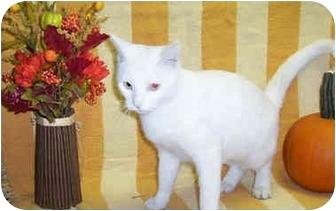 Domestic Shorthair Cat for adoption in Murphysboro, Illinois - Flower