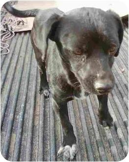 Dachshund Mix Dog for adoption in Anza, California - Dexter