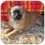 Photo 3 - Husky Mix Puppy for adoption in Marion, North Carolina - Nala