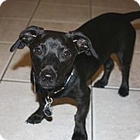 Adopt A Pet :: Jenson  *Adopted - Oklahoma City, OK
