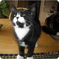 Adopt A Pet :: Robert - Riverside, RI