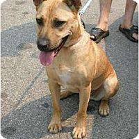 Adopt A Pet :: Rosa - Rancho Palos Verdes, CA