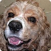 Adopt A Pet :: Werther - San Diego, CA