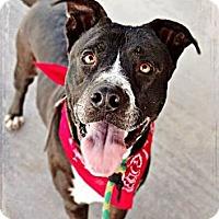Adopt A Pet :: Charlie - Phoenix, AZ