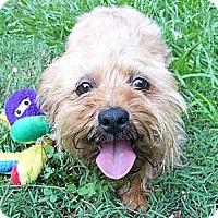 Adopt A Pet :: Wiggles - Mocksville, NC