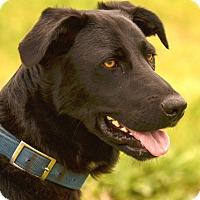 Adopt A Pet :: *Abbie - PENDING - Westport, CT