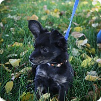 Adopt A Pet :: Gracie - Broomfield, CO