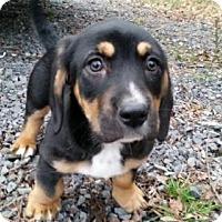 Adopt A Pet :: Bea - Manhattan, NY
