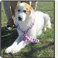Adopt A Pet :: BOONE - LaGrange, KY