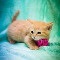 Adopt A Pet :: Dahlia - Circleville, OH
