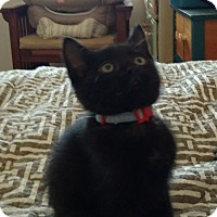 Adopt A Pet :: Castle - Colorado Springs, CO