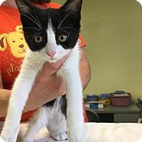Adopt A Pet :: Hershey - Orleans, VT