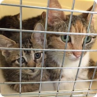 Adopt A Pet :: Autumn - Trexlertown, PA