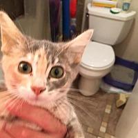 Adopt A Pet :: Daisy - Littleton, CO