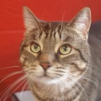 Adopt A Pet :: Argus - Sarasota, FL