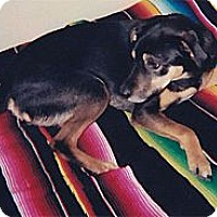 Adopt A Pet :: Bella sweety needs lots of lov - Sacramento, CA