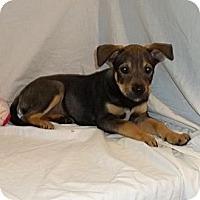 Adopt A Pet :: Madison - South Jersey, NJ