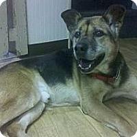 Adopt A Pet :: Peter - Fort Hunter, NY