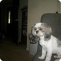 Adopt A Pet :: Toby - Albany, NY