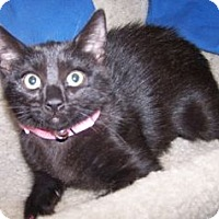 Adopt A Pet :: K-Twinkle3-Loretta - Colorado Springs, CO