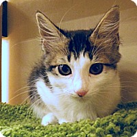 Adopt A Pet :: Hope - The Colony, TX