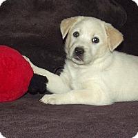 Adopt A Pet :: Willa - Phoenix, AZ