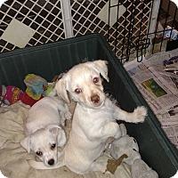 Adopt A Pet :: pups - Simi Valley, CA