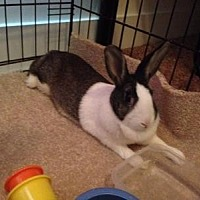 Adopt A Pet :: Padi - Williston, FL