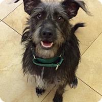 Adopt A Pet :: Emma - Mission Viejo, CA