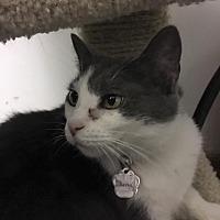 Adopt A Pet :: Fawna - Powell, OH