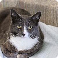 Adopt A Pet :: Misty - Tioga, PA
