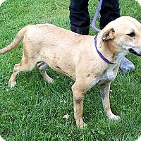 Adopt A Pet :: Sissy - Metamora, IN