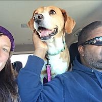Adopt A Pet :: Rosie - URGENT!!! - Clarksville, TN