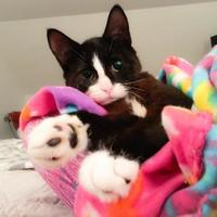 Adopt A Pet :: Pixie - SPECIAL NEEDS - Wantagh, NY