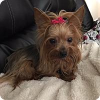 Adopt A Pet :: Morticia - Baton Rouge, LA