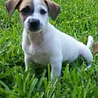 Adopt A Pet :: Ben - Ft. Lauderdale, FL